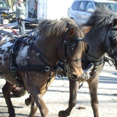 Harry & Hector voor de aller kleinste pony's